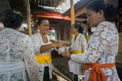 preparing (kuuan) Tags: manualfocus mf voigtländer15mm cvf4515mm 15mm bali indonesia sonynex5n festival temple preparations offerings ladies kebaya duck