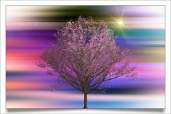The tree ... (Julie Greg) Tags: tree colours texture sun art abstract leaves canon