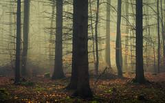 Beloved Maze (Netsrak) Tags: baum bäume eu eifel europa europe forst landschaft natur nebel rheinland rhineland wald fog forest landscape mist nature trees winter woods
