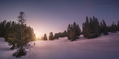 The Beauty of Winter (Manuel.Martin_72) Tags: graubünden prättigau swissalps switzerland alpenglow drama enchanting fairytale lightdrama magic majestic fields forest mountainslope trees woods frozen ice snow bluesky glow nocloud skyburning snowy sun sunset evening pany ch