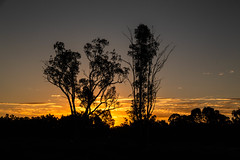 Christmas Eve sunset (David Redfearn) Tags: sunset riverinasunset moulamein moulameinnsw canon6d canoneos6d canonef24105mm twilight christmaseve australiansunset riverina