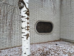 Cold Oval (Rock Water) Tags: tree aspen stark window oval abstract