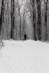 IMG_0053_AutoColor (LifeIsForEnjoying) Tags: snow mushing dog sledding dogs snowboard sled nike kaskae