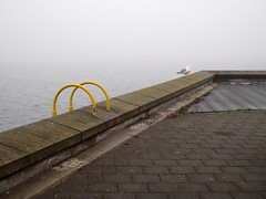 kiel_P1191761 (ghoermann) Tags: deu düsternbrook geo:lat=5433260161 geo:lon=1015189584 geotagged germany kiel schleswigholstein bird seagull balticsea fog