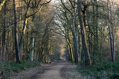 Der Waldweg (KL57Foto) Tags: knipprather wald monheim am rhein 2019 germany januar kl57foto landschaften nrw natur nordrheinwestfalen omdem1 olympus winter knippratherwald monheimamrhein
