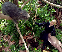 Dread Pirate Roberts (and ROUS) (Cremdon) Tags: rous rodentofunusualsize princessbride westley dreadpirateroberts 16scale actionfigures qmx