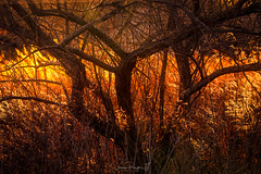 Realm of the Whispering Woods No.2 (Simmie | Reagor - Simmulated.com) Tags: connecticutphotographer d750 landscapephotographer naturephotographer nikon digital milford connecticut unitedstates us