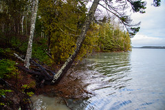 A very high tide at Binnshire (Brett of Binnshire) Tags: scenic shoreline usa hancockcounty binnshire trees plants locationrecorded bay weather gouldsboro ocean cove maine water clouds us hightide shore winter