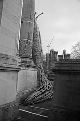 Giant Leopard Slugs 2018, Monster Chetwynd (Artist), Tate Britain, Millbank, SW1, City of Westminster, London (f1jherbert) Tags: sonya68 sonyalpha68 alpha68 sony alpha 68 a68 sonyilca68 sony68 sonyilca ilca68 ilca sonyslt68 sonyslt slt68 slt londonengland londonuk londongb londongreatbritain londonunitedkingdom london england uk gb united kingdom great britain greatbritain unitedkingdom artintheundergrowth giantleopardslugs2018monsterchetwyndartisttatebritainmillbanksw1cityofwestminsterlondon giantleopardslugs2018monsterchetwyndartisttatebritainmillbanksw1cityofwestminster giantleopardslugs2018monsterchetwyndartisttatebritainmillbanksw1 cityofwestminsterlondon cityofwestminster giantleopardslugs2018monsterchetwyndartisttatebritainmillbank sw1cityofwestminsterlondon giantleopardslugs2018monsterchetwyndartisttatebritain millbanksw1cityofwestminsterlondon tatebritainmillbank tatebritainlondon giantleopardslugs2018monsterchetwyndartist tatebritainmillbanksw1cityofwestminsterlondon giantleopardslugs2018monsterchetwynd giantleopardslugs2018 monsterchetwyndartist monsterchetwynd tatebritain millbanksw1 westminsterlondon giant leopard slugs 2018 monster chetwynd artist tate millbank sw1 city westminster blackandwhite bw black white