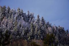 Winterwald (Pfalzfotos) Tags: rlp rheinlandpfalz pfalz wald winterwald