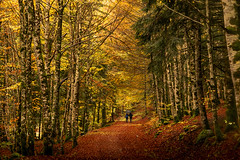 IRATI 25 (juan luis olaeta) Tags: paisajes landscape forrest basoa bosque pagoa hayedo tree otoño udazkena autumn irati fujifilmxt2