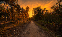 Fire in the Forest. (Alex-de-Haas) Tags: 11mm adobe adobelightroom aurorahdr aurorahdr2019 blackstone d850 dutch europa europe european hdr holland irix irix11mm irixblackstone lightroom limburg molenhoek mook mookerheide nederland nederlands netherlands nikon nikond850 skylum autumn beautiful beauty bomen boom bos cirrus cloud clouds colorful colourful fall forest heide herfst landscape landschaft landschap mooi nature natuur park pretty schoonheid sky skyscape sundown sunset tree trees warm wolk wolken woods zonsondergang nl