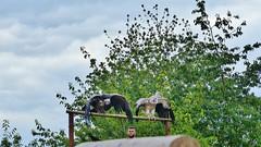 Pairi Daiza (58) (Johnny Cooman) Tags: brugelettecambroncasteau wallonie belgië bel animal dieren natuur ベルギー aaa panasonicdmcfz200 henegouwen hainaut belgium bélgica belgique belgien belgia zoo vogel bird vögel oiseau tree boom baum arbre wolken wolk wolkformatie wolkformaties nuages cloudscapes