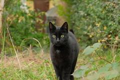 DSCF0049 (Hansjepansjekevertje_) Tags: katten kat cats cat siep