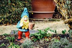 Keep out of my garden (nigelboulton72) Tags: gnome vintage garden ornament