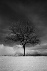 monochrome tree snow clouds (johngpt) Tags: sandiamtns trees snow clouds places tree efs1755mmf28isusm canon40d thursdaymonochome
