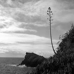 Dog Rock Azores (salparadise666) Tags: nils volkmer medium format analogue film camera square 6x6 azores portugal fomapan landscape bw black white monochrome rollei sl66 planar 80mm 100 caffenol cl 36min