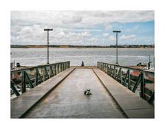 Barreiro, Portugal (Sr. Cordeiro) Tags: barreiro portugal margemsul dock doca cais pier gato stray vadio cat rio river tejo tagus panasonic lumix gx80 gx85 14140mm