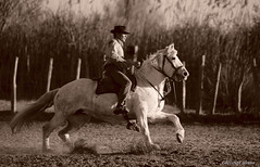 _DSC0696 (chris30300) Tags: camargue cheval