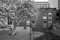 Magnolia (cybertect) Tags: brutalism carlzeissmmdistagont28mmf28 chamberlinpowellandbon cityoflondon ec2 london londonec2 magnolia modernism sonya7ii stgilesterrace thebarbican thepostern architecture blackwhite blackandwhite monochrome tree water england unitedkingdom gb