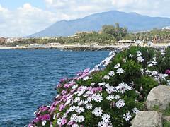 Flowery View! ('cosmicgirl1960' NEW CANON CAMERA) Tags: marbella spain espana andalusia costadelsol puertobanus blue sky water travel holidays green yabbadabbadoo