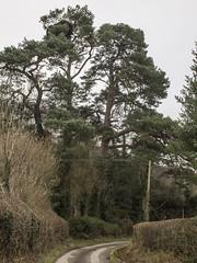 (Turbogirlie) Tags: radnorshire powys oldways oldbyways droverslanes droversroutes cascob ednol radnorforest radnorshirecountryside wales cymru cymraeg cymruambyth scotspinetree dyffryn publicfootpaths publicrightsofway bridleways ackwoodlane spriggwood spriggcottage