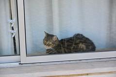 Almada 2018 – Cat (Michiel2005) Tags: cat kat poes window raam almada portugal dier animal