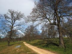 along the path (Johnson Cameraface) Tags: 2019 march spring olympus omde1 em1 micro43 mzuiko 1240mm f28 johnsoncameraface yorkshiresculpturepark path walking ysp trees