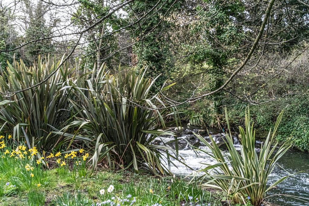 THE BOTANIC GARDENS IN GLASNEVIN DUBLIN [ TODAY I USED A VOIGTLANDER 40mm F1.2 LENS]-150644
