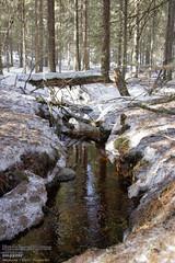 Helvetinjärvi Nationalpark (PeepeT) Tags: helvetinjärvinationalpark helvetinjärvenkansallispuisto talvi winter stream puro