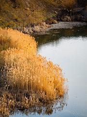 pure_nature (Joerg Esper) Tags: kretz deutschland germany mayenkoblenz rheinlandpfalz de natur nature landscape landschaft see lake reh rehe deer deers wasser water olympus olympusomdem1 olympusmzuikodigitaled75‑300mm148‑67ii