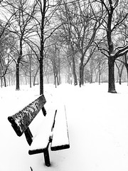 Winter Park Point-Saint-Charles (Montreal) (MassiveKontent) Tags: park benches shadows winter snow trees contrast noiretblanc blackwhite montreal bw city monochrome urban blackandwhite street photo montréal quebec canada photography bwphotography streetshot android cold pointsaintcharles tree
