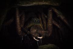 Aragog (Edd144) Tags: harry potter studio tour london philosophers stone chamber secrets prisoner azkaban goblet fire order phoenix half blood prince deathly hallows movies books film behind scenes magic wizard witch sorcerer spider aragog arachnid