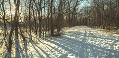 EOS_0119-1477 (DAN PHOTOGRAFIX) Tags: canon eos 6d reflex rehel stmichel paysage hiver winter sun soleil cold froid tree arbre ecorce bark snow neige glace ice ciel sky nuage cloud
