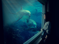 Morning Coffee (Kilarilari) Tags: photoshop underwater dolphin dolphins blue morning coffee