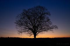 in search of spring (benno.dierauer) Tags: canoneosr canonrf24105 tree baum abendrot bluehour blauestunde silhouette artofnature schweiz switzerland