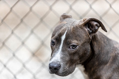Edward18Jan201956.jpg (fredstrobel) Tags: dogs pawsatanta pets atlanta animals usa ga places pawsdogs decatur georgia unitedstates us