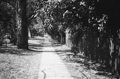 Footpath (Matthew Paul Argall) Tags: hanimex35es fixedfocus focusfree 35mmfilm kentmerepan100 100isofilm blackandwhite blackandwhitefilm footpath