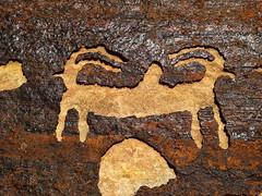 Cookie Cutter Petroglyphs in Apple Valley UT (swissuki) Tags: applevalley ut cookiecutter petroglyphs rock artefacts