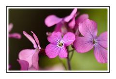 Pleasures of Pink (Audrey A Jackson) Tags: canon450 flower petals pink nature closeup macro
