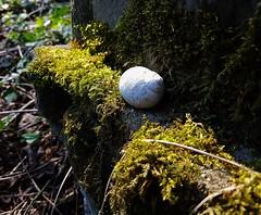 (claudine6677) Tags: friedhof graveyard verfallen decay gravestone tombstone old alt schnecke snail