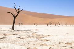 _RJS4687 (rjsnyc2) Tags: 2019 africa d850 desert dunes landscape namibia nikon outdoors photography remoteyear richardsilver richardsilverphoto safari sand sanddune travel travelphotographer animal camping nature tent trees wildlife