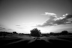 (Adriano Delmonte) Tags: acquavivadellefonti adrianodelmonte alberi bari cielo contrada gioiadelcolle nuvole oil olio orizzontale parco pascolo piante propugliaphoto puglia raccolta south sud terra ulivi ulivo tree muretto secco agro murettiasecco italy