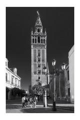 Giralda de Sevila (jetepe72) Tags: giralda sevilla blanco y negro blackandwhite olympus urban urbana caballo catedral