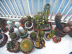 My Cactus Garden in Faux Colored Chalk (EmperorNorton47) Tags: portolahills california photo digital winter containergarden containergardening pottedplants cactus cacti fauxcoloredchalk sfx specialeffects
