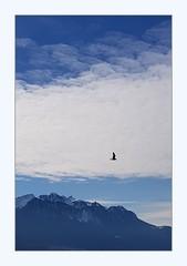 just one (overthemoon) Tags: switzerland suisse schweiz svizzera romandie vaud montreux lake léman lakegeneva mountains alps water blue sunny winter frame utata:project=3rds