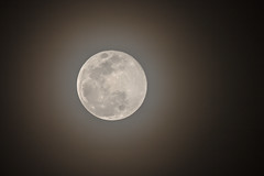 Super Snow Moon - bright and biggest of the year (captured views) Tags: moon supersnowmoon lunar capturedviews capturingthelivinglandscape nature winter trioofmoons canoneos1dxef500mmf4lisiiusm14xiii handheld supermoon february192019 f11iso125113 fullmoon