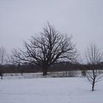 000020 - oak tree 12-07-02