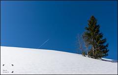 Simplement (reko22) Tags: neige sapin ciel bleau blanc
