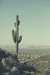 (JawshBeavz) Tags: scottsdale az arizona four seasons travel party explore desert whatever cactus troonnorth
